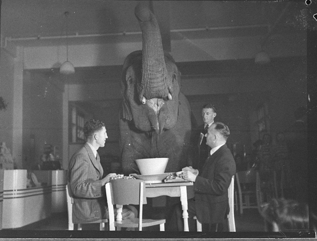 3 men in a room with an Elephant at a table